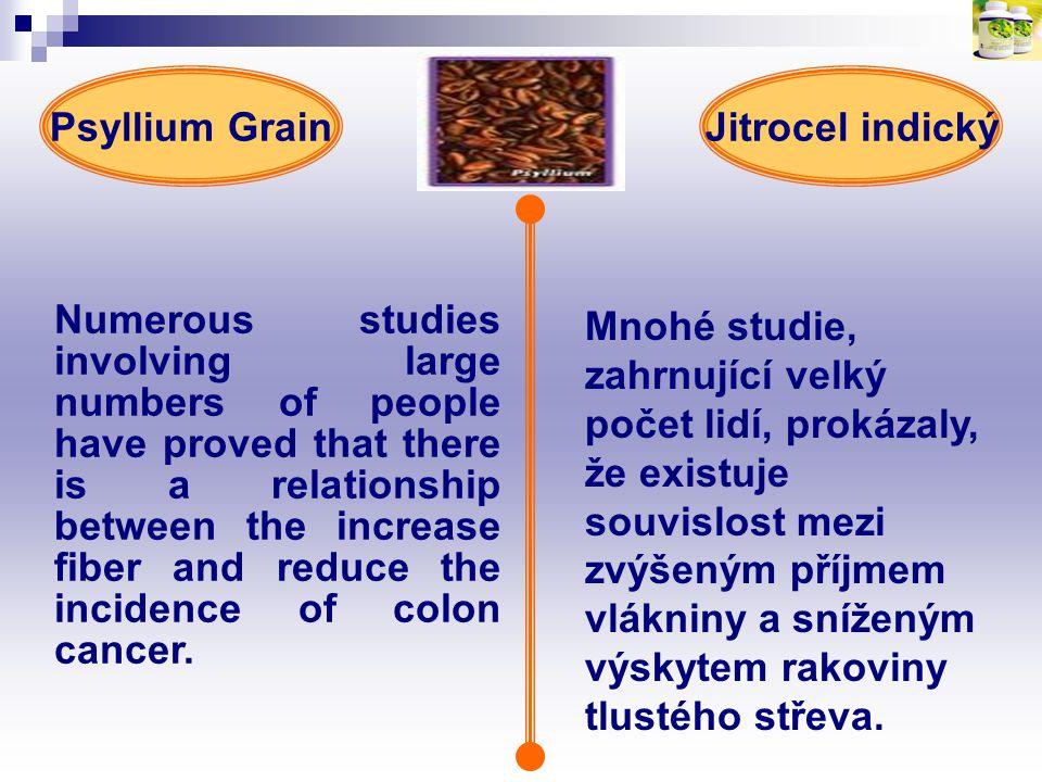 Psyllium Grain Jitrocel indický.