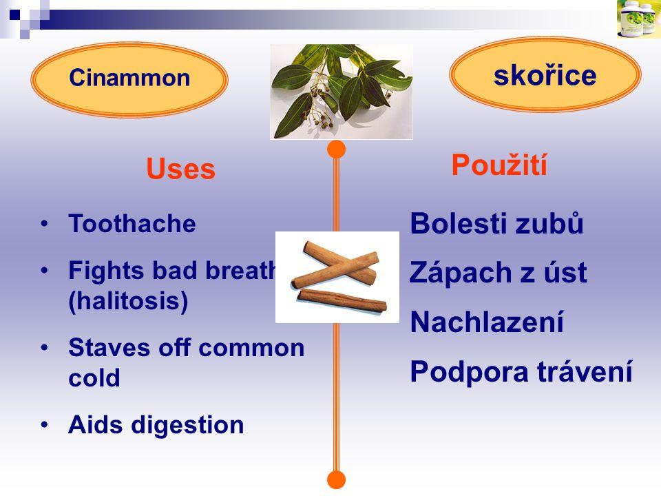skořice Uses Použití Bolesti zubů Zápach z úst Nachlazení