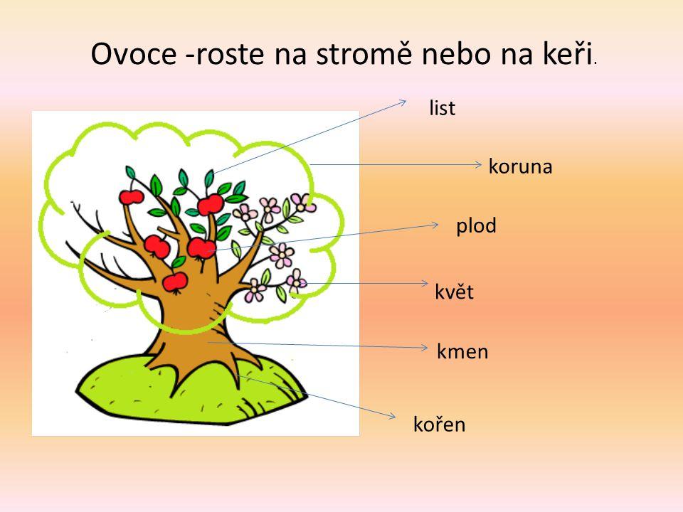 Ovoce -roste na stromě nebo na keři.