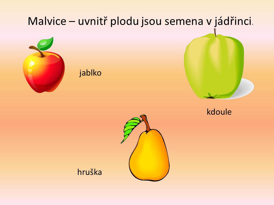 Malvice – uvnitř plodu jsou semena v jádřinci.