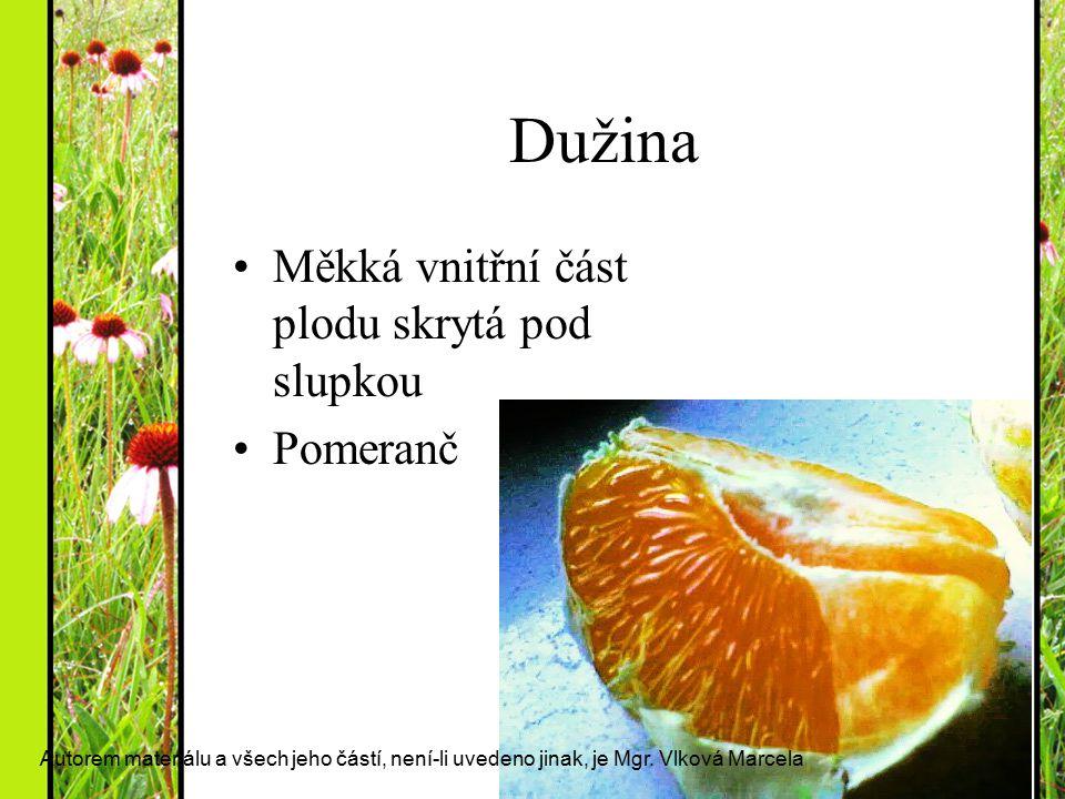Dužina Měkká vnitřní část plodu skrytá pod slupkou Pomeranč