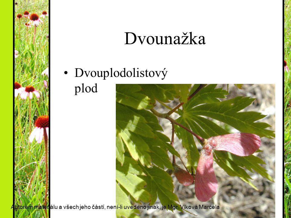 Dvounažka Dvouplodolistový plod