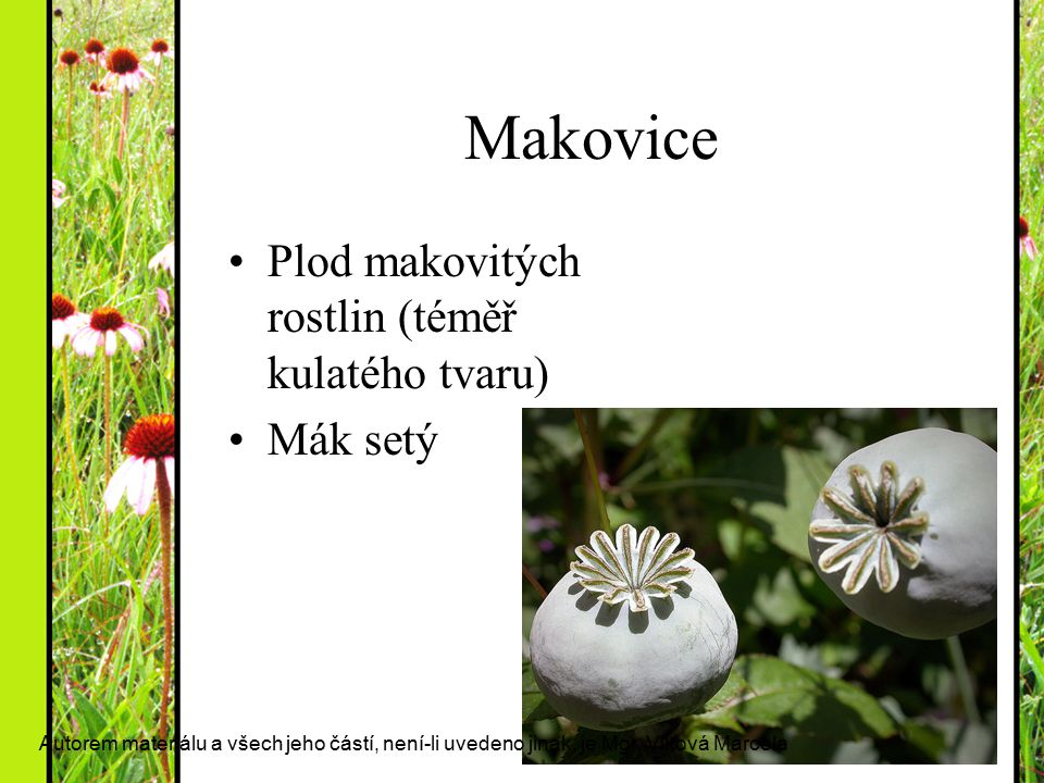 Makovice Plod makovitých rostlin (téměř kulatého tvaru) Mák setý