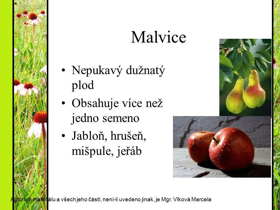 Malvice Nepukavý dužnatý plod Obsahuje více než jedno semeno