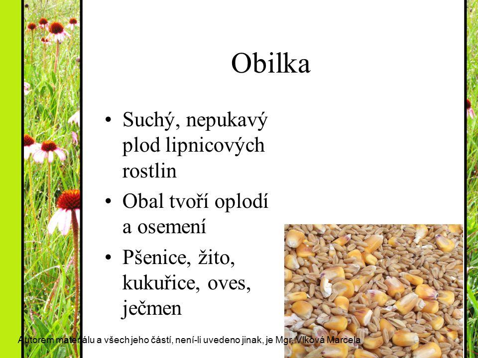 Obilka Suchý, nepukavý plod lipnicových rostlin