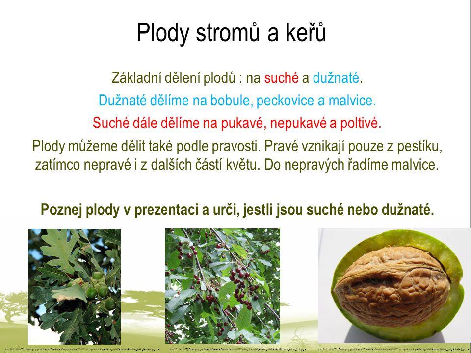 Poznej plody v prezentaci a urči, jestli jsou suché nebo dužnaté.