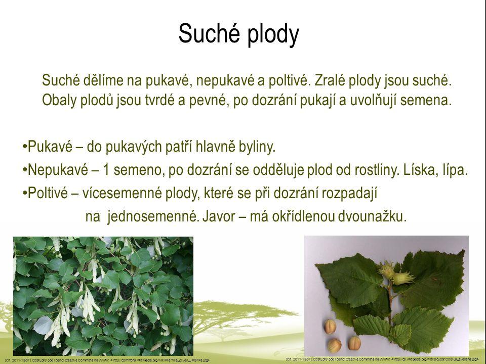 Suché plody Suché dělíme na pukavé, nepukavé a poltivé. Zralé plody jsou suché. Obaly plodů jsou tvrdé a pevné, po dozrání pukají a uvolňují semena.