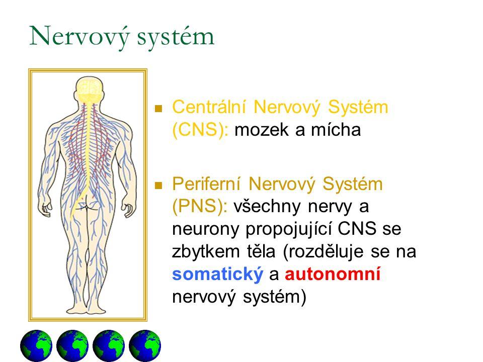 Nervový systém Centrální Nervový Systém (CNS): mozek a mícha
