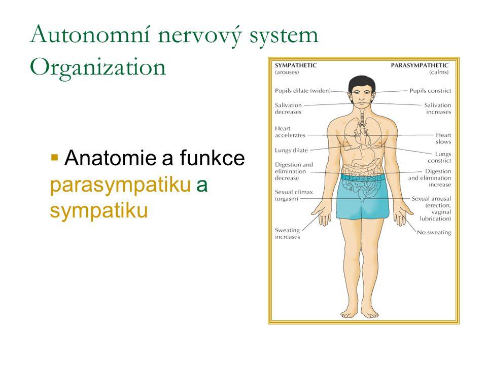 Autonomní nervový system Organization