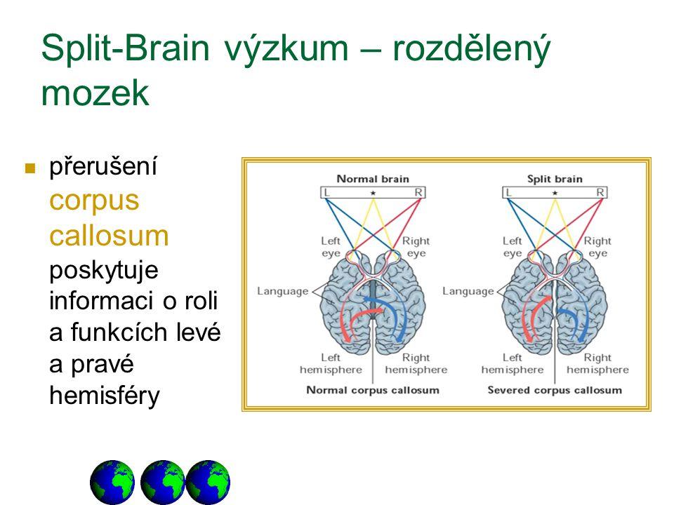 Split-Brain výzkum – rozdělený mozek