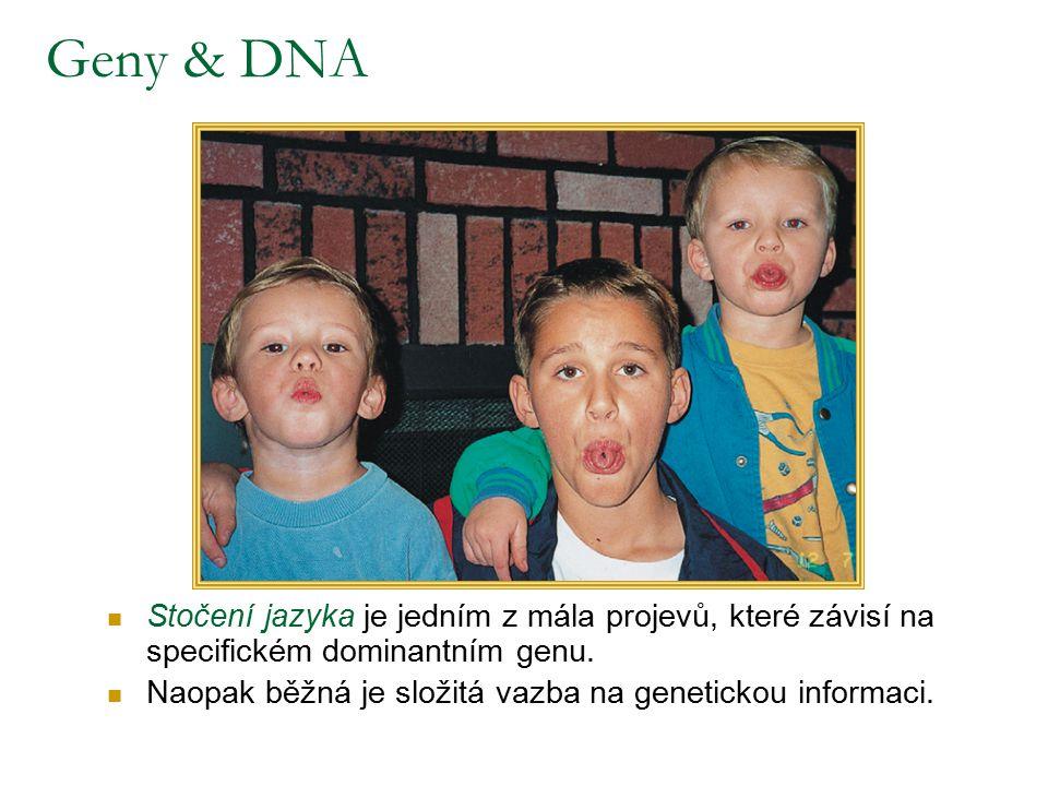 Geny & DNA Stočení jazyka je jedním z mála projevů, které závisí na specifickém dominantním genu.
