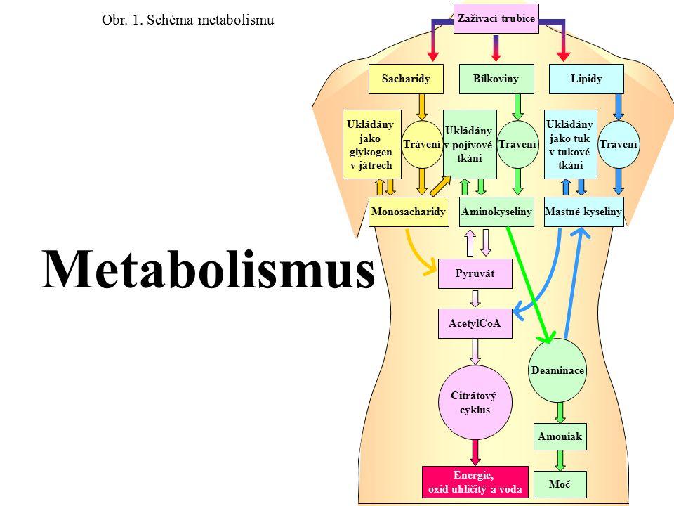 Obr. 1. Schéma metabolismu