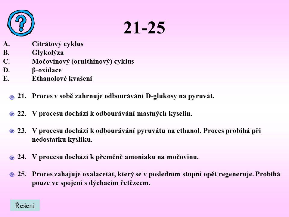 21-25 Citrátový cyklus Glykolýza Močovinový (ornithinový) cyklus