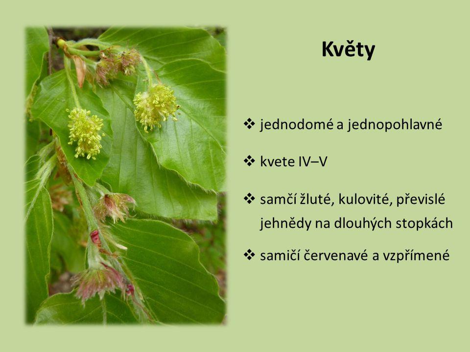 Květy jednodomé a jednopohlavné kvete IV–V