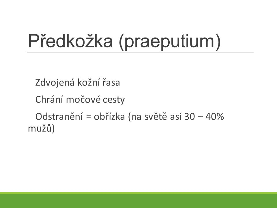 Předkožka (praeputium)