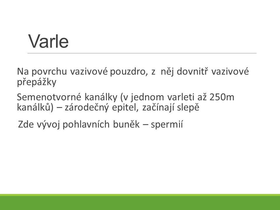 Varle