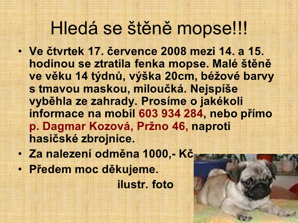 Hledá se štěně mopse!!!