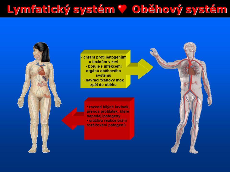 Lymfatický systém Oběhový systém chrání proti patogenům