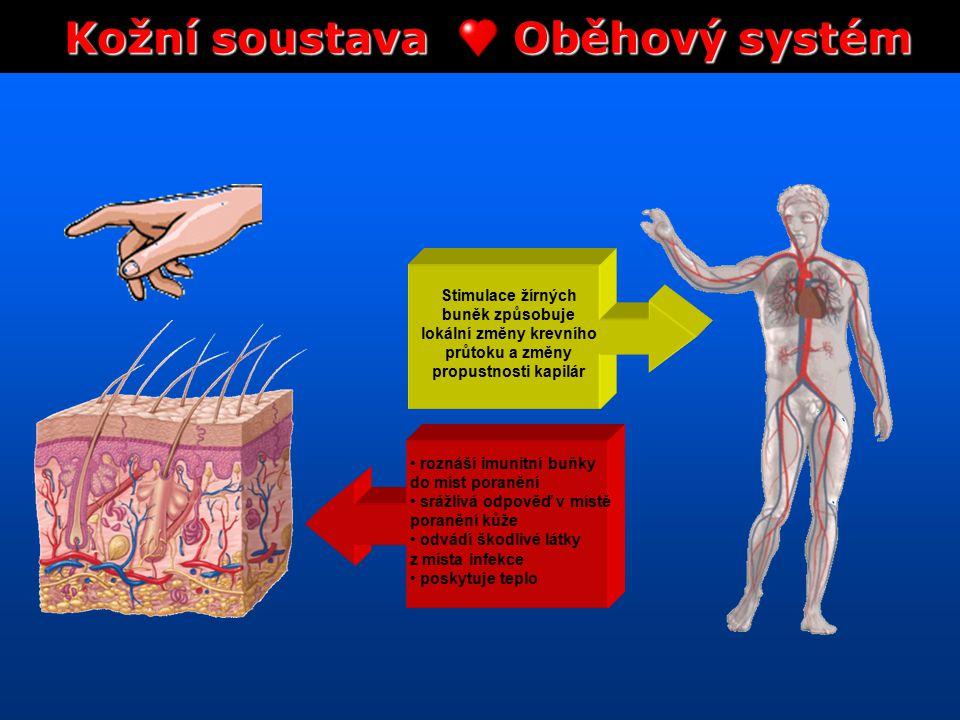 Kožní soustava Oběhový systém lokální změny krevního