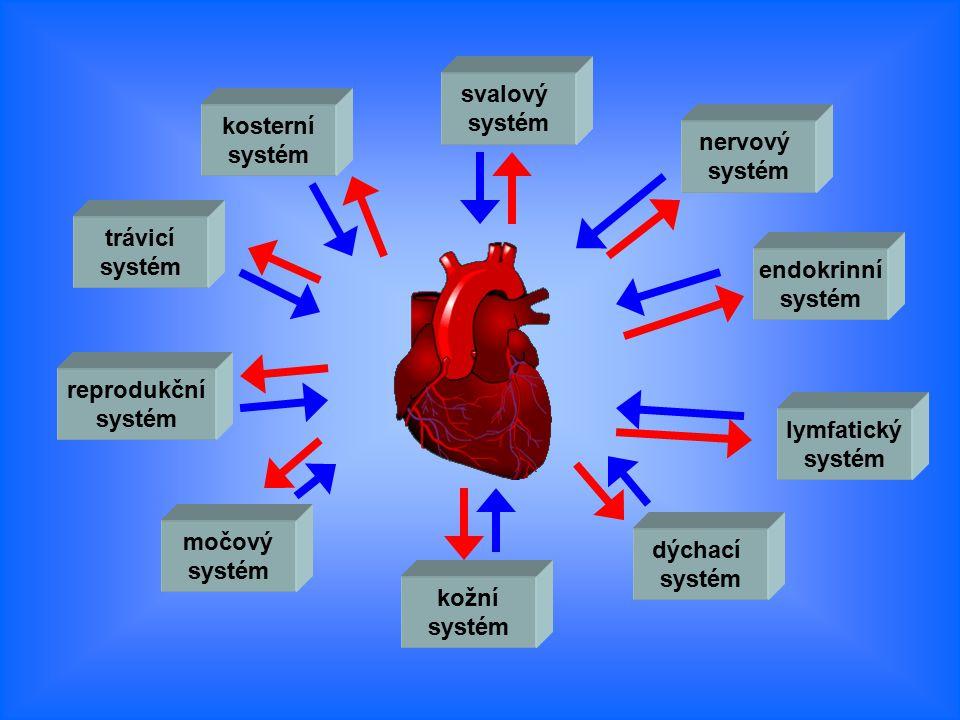 svalový systém. kosterní. systém. nervový. systém. trávicí. systém. endokrinní. systém. reprodukční.