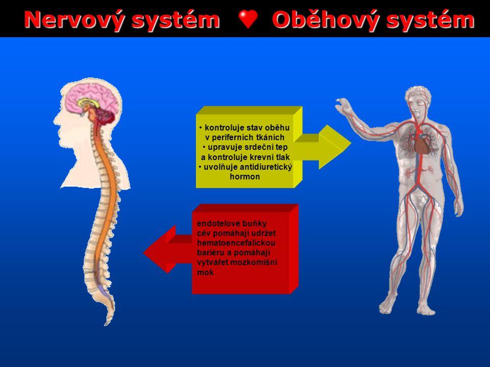 Nervový systém Oběhový systém