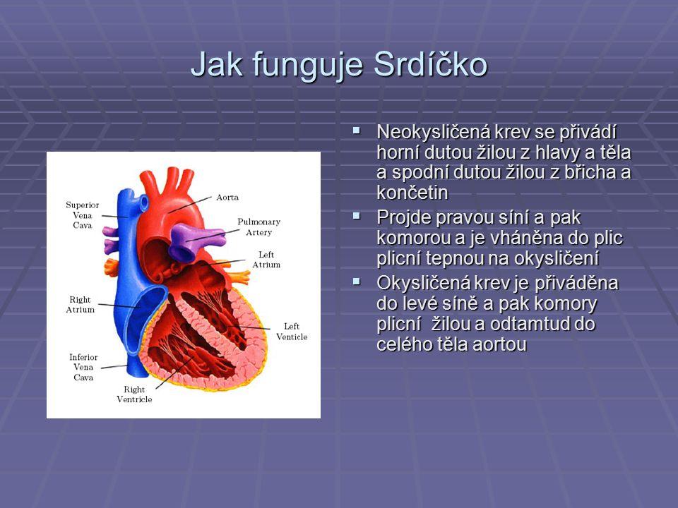 Jak funguje Srdíčko Neokysličená krev se přivádí horní dutou žilou z hlavy a těla a spodní dutou žilou z břicha a končetin.