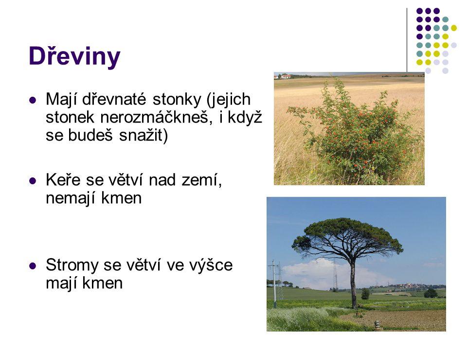 Dřeviny Mají dřevnaté stonky (jejich stonek nerozmáčkneš, i když se budeš snažit) Keře se větví nad zemí, nemají kmen.