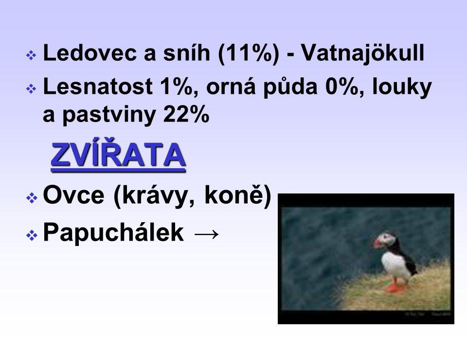 ZVÍŘATA Ovce (krávy, koně) Papuchálek →