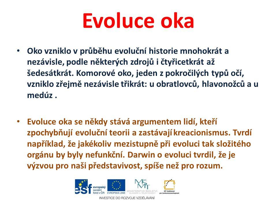 Evoluce oka