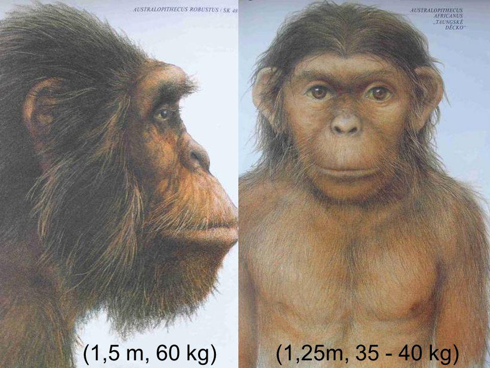 (1,5 m, 60 kg) (1,25m, 35 - 40 kg)