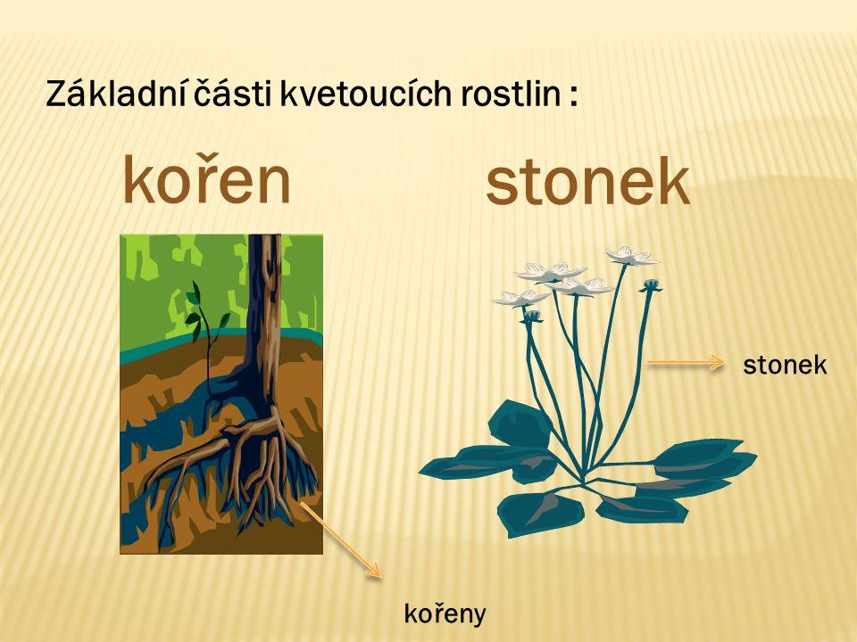 Základní části kvetoucích rostlin :