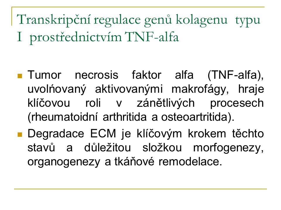 Transkripční regulace genů kolagenu typu I prostřednictvím TNF-alfa