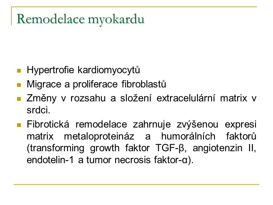 Remodelace myokardu Hypertrofie kardiomyocytů
