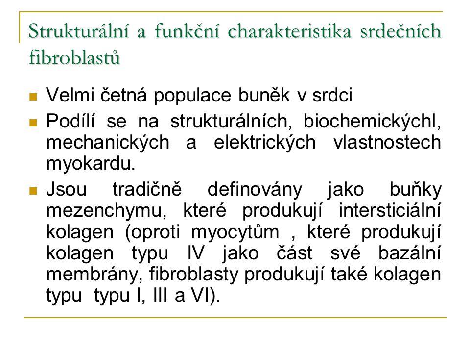 Strukturální a funkční charakteristika srdečních fibroblastů