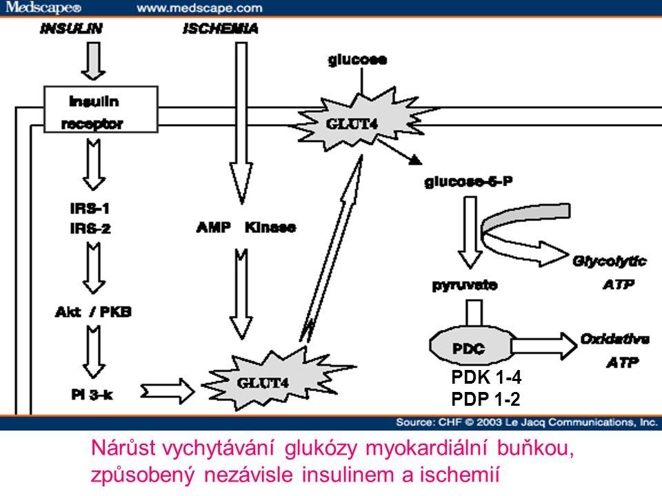 Nárůst vychytávání glukózy myokardiální buňkou,