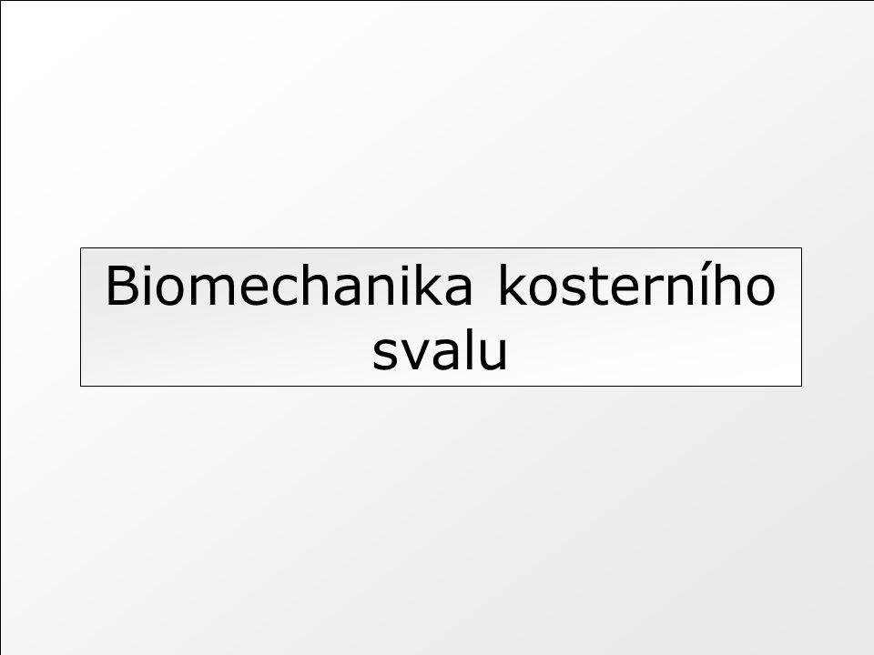 Biomechanika kosterního svalu