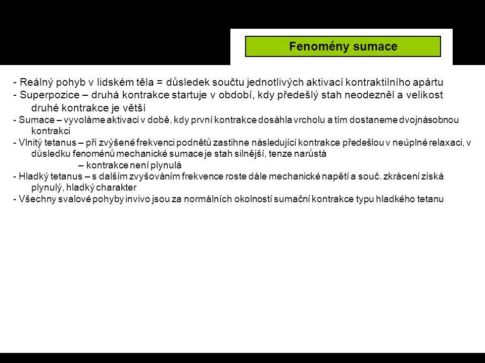 Fenomény sumace - Reálný pohyb v lidském těla = důsledek součtu jednotlivých aktivací kontraktilního apártu.