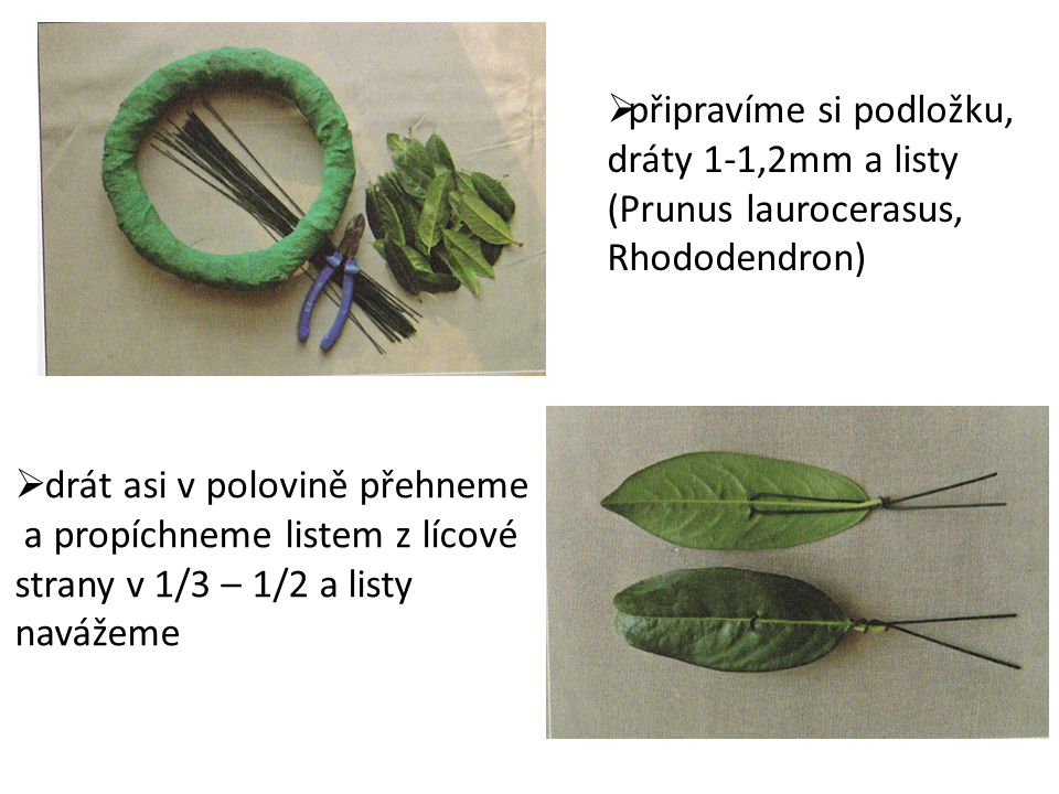 připravíme si podložku, dráty 1-1,2mm a listy (Prunus laurocerasus, Rhododendron)