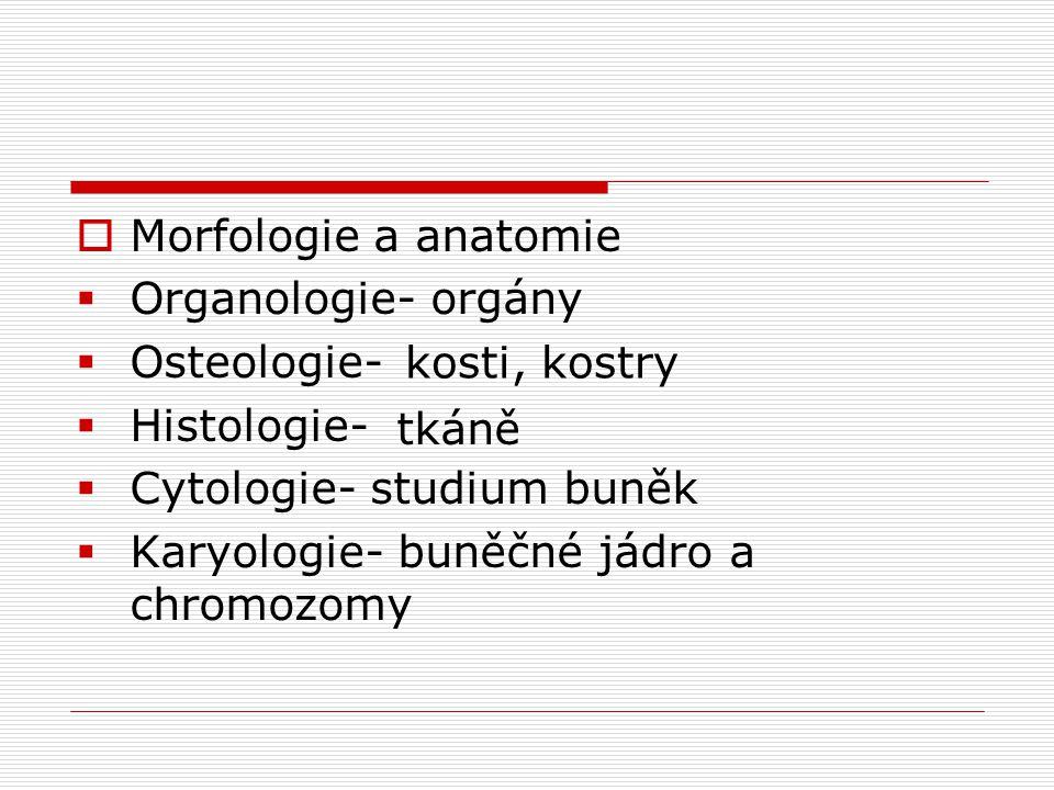 Morfologie a anatomie Organologie- orgány. Osteologie- Histologie- Cytologie- studium buněk. Karyologie- buněčné jádro a chromozomy.