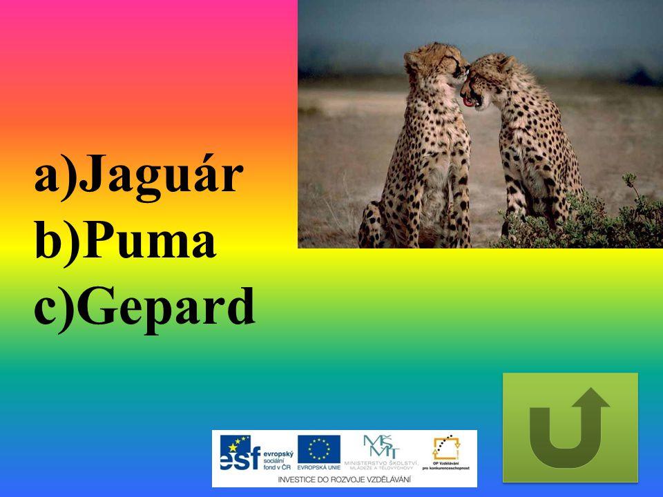 Jaguár Puma Gepard