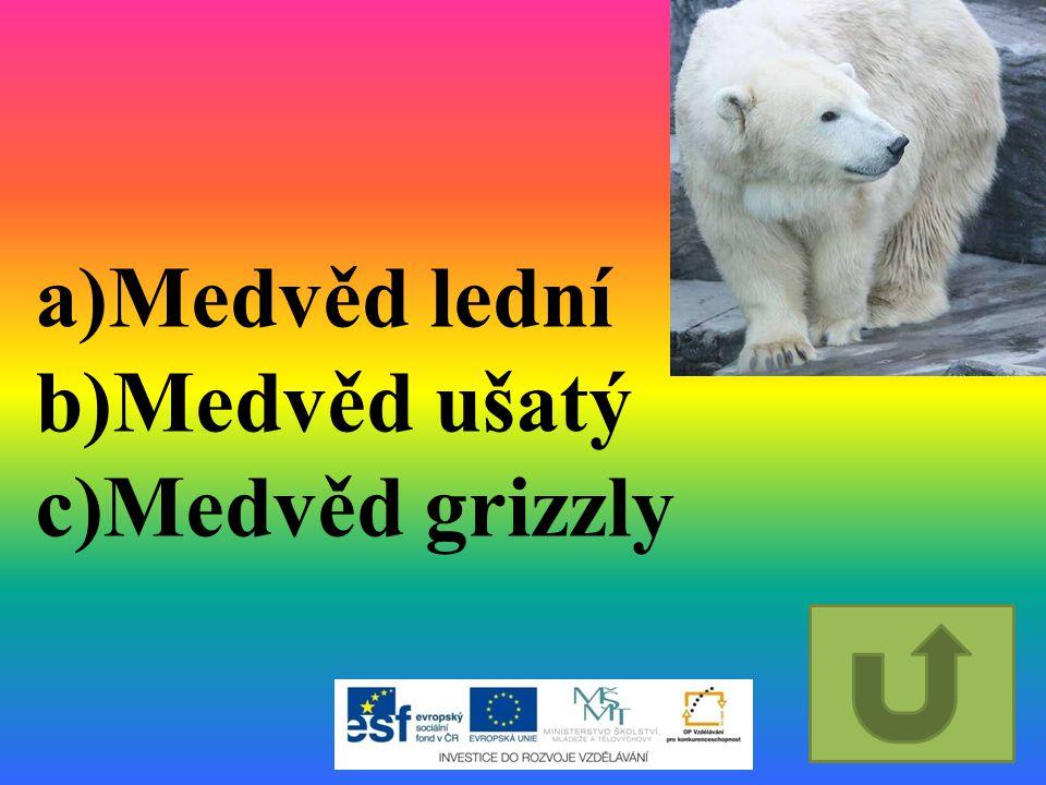 Medvěd lední Medvěd ušatý Medvěd grizzly