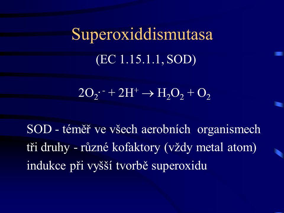 Superoxiddismutasa (EC 1.15.1.1, SOD) 2O2. - + 2H+  H2O2 + O2
