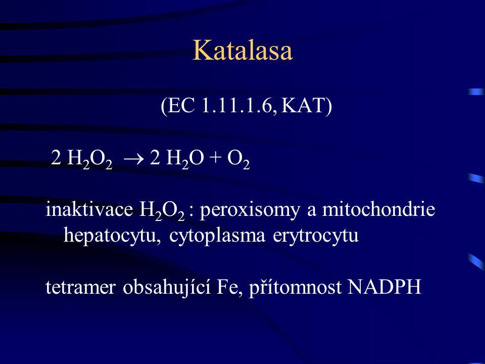 Katalasa (EC 1.11.1.6, KAT) 2 H2O2  2 H2O + O2