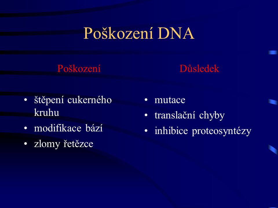 Poškození DNA Poškození štěpení cukerného kruhu modifikace bází