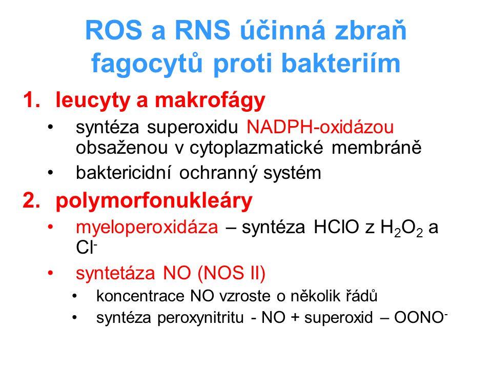 ROS a RNS účinná zbraň fagocytů proti bakteriím