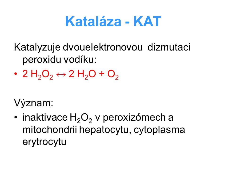 Kataláza - KAT Katalyzuje dvouelektronovou dizmutaci peroxidu vodíku:
