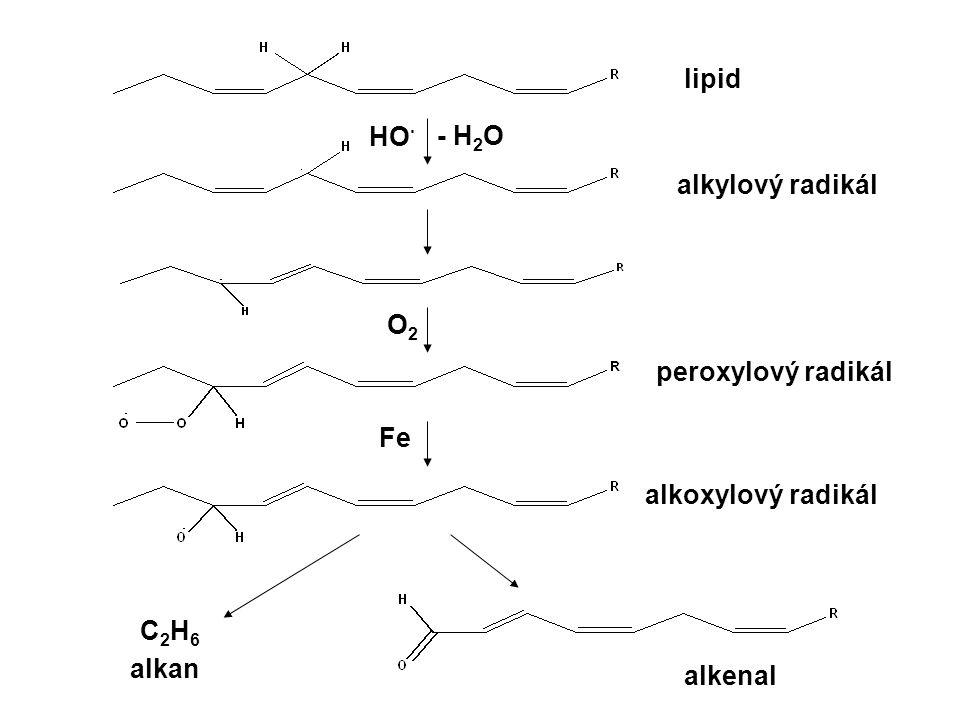 lipid HO· - H2O alkylový radikál O2 peroxylový radikál Fe alkoxylový radikál C2H6 alkan alkenal