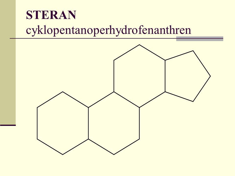 STERAN cyklopentanoperhydrofenanthren
