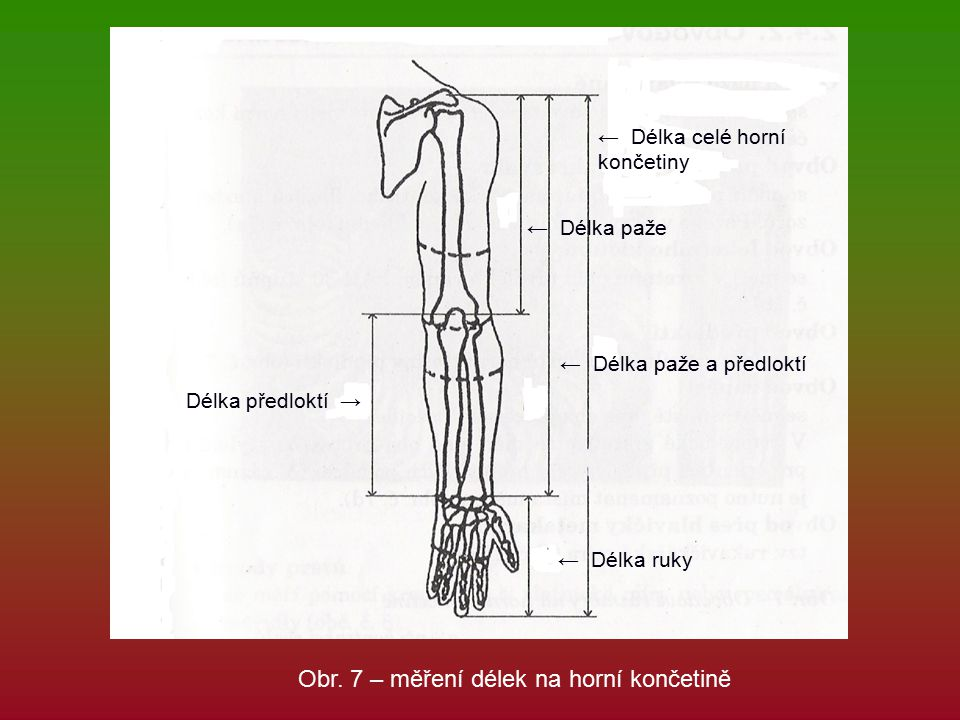 Obr. 7 – měření délek na horní končetině