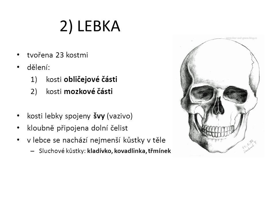 2) LEBKA tvořena 23 kostmi dělení: kosti obličejové části